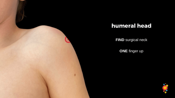 Landmarks of the humeral head for IO insertion