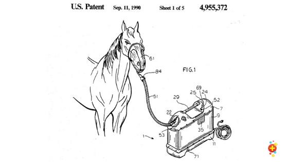 Horse on hgih flow